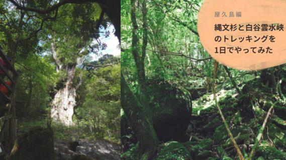 縄文杉と白谷雲水峡のトレッキングを1日でやってみた【時間のない屋久島旅行におすすめ!】
